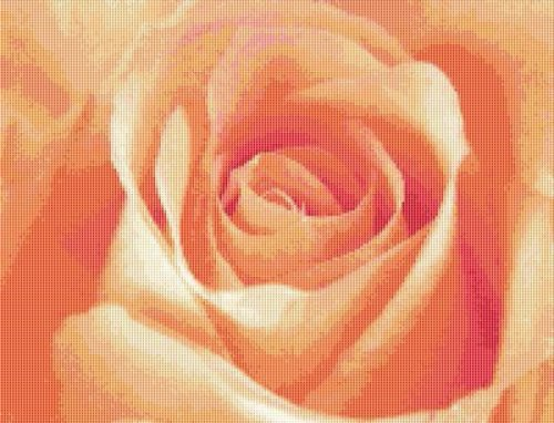 Single Apricot Rose Cross Stitch Pattern